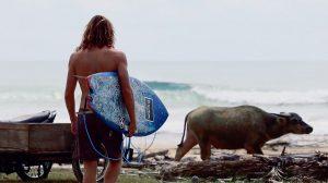 【オルタナティブ】ツインフィンマスターAsher Paceyによるシメルー島トリップ
